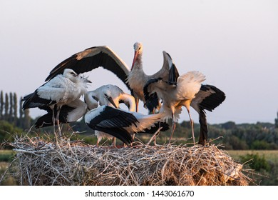 stork and baby in stork nest and Sparrow's nest