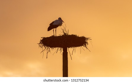 Stork bird Winter Europe