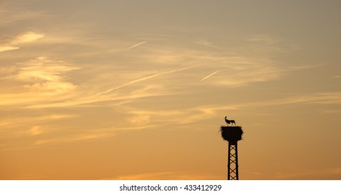 Stork couple in stork nest in front of warm sky at sunset