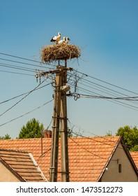 stork family in Hungary, Badacsony