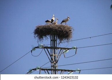 Stork family living in nest on electric pole against blue sky in Andalusia, Spain