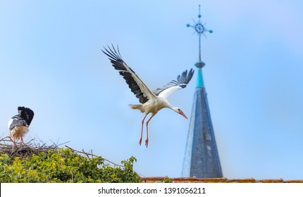 stork flying out of the nest with church tower background, alsace france