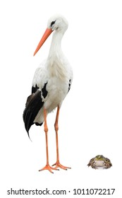 stork and frog  on a white background