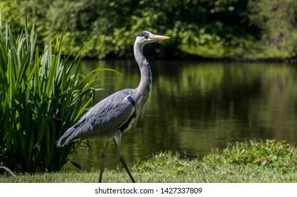 Stork hanging out in Vondelpark