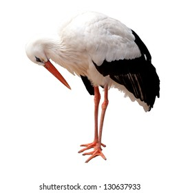 Stork isolated on white background
