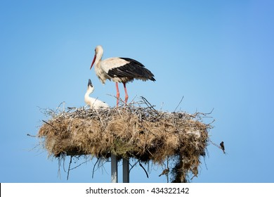 Stork with little stork in a nest