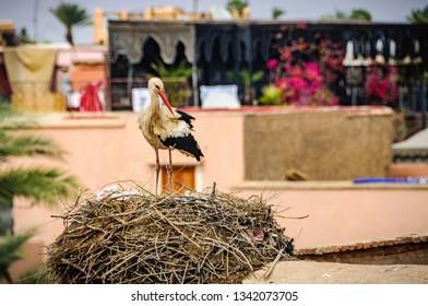 Stork nest in Badi palace in the Medina of Marrakech, Morocco
