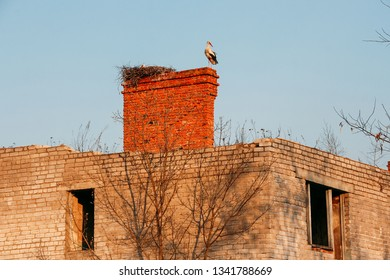 Stork in the nest on an old brick unbuilt house