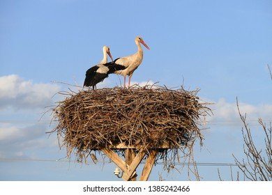 stork nest, stork nest on the pole and two storks,