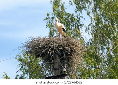 Stork in a nest on a power line support. Smolensk Oblast, Russia.