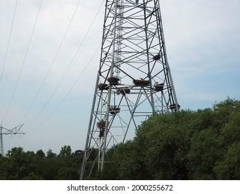 A lot of stork nests in a electricity pylon near Zaltbommel, Netherlands