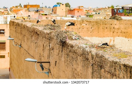 Stork nests in the Medina of Marrakech, Morocco