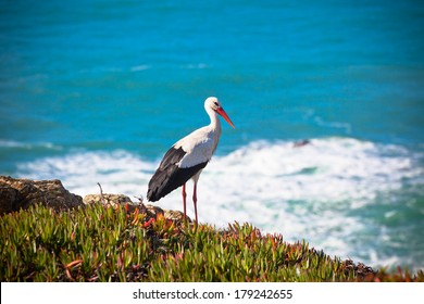 Stork on a Cliff at Western Coast of Portugal. Horizontal shot