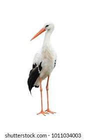 stork on a white background