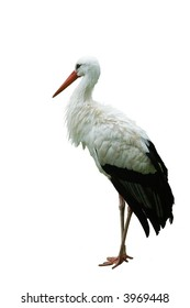 Stork on white background