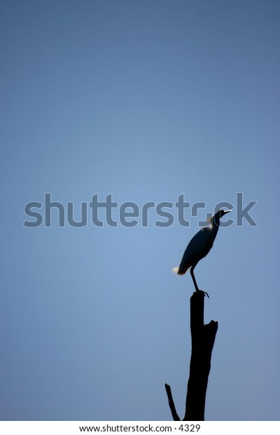 stork perched atop a leafless tree