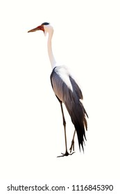 stork portrait isolated on white background, unknown typology. seen on roundtrip in south africa.