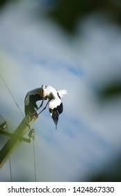 Stork preparing to take off - birdwatching with the frame of leaves