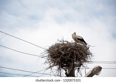 Stork returning to the nest in spring. Large migratory bird with black and white plumage. White stork and nestling on cloudy sky. Stork family. Stork in stick nest on electrci pole. A cute bird.