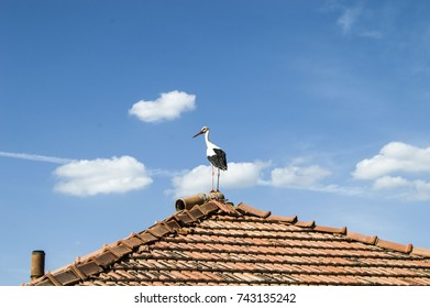 stork standing on the roof of the house in the spring