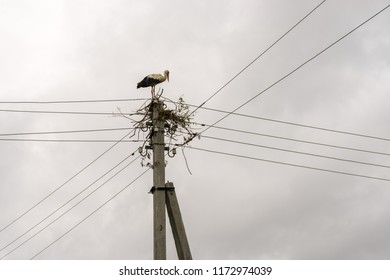 Stork stands on power line pole against blue sky background