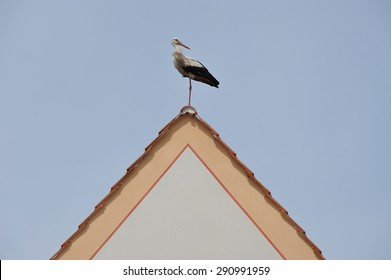 Stork - This beautiful bird posed for my camera in a small village in the Czech Republic. A passer-by commented that they thought it was not real... until it moved.