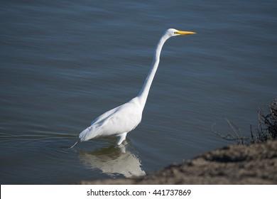 Stork, Wildlife Refuge, San Francisco, California, USA