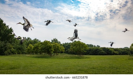 Storks at Naturepark Lelystad