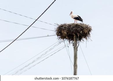 storks nest alentejo portugal