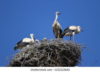 Stork's Nest in Eguisheim