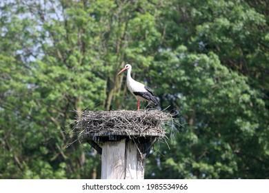 Stork's nest in Oud Avereest, Netherlands