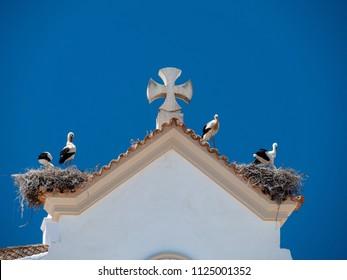 Storks on church Matriz de Nossa Senhora do Rosario, Olhao, Portugal