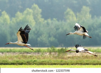Storks on green grass in sunny day on field