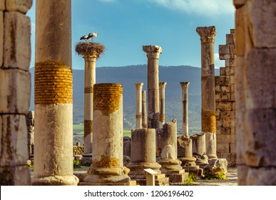 Storks on the nest at ruins of an ancient roman city in Volubilis, Morocco