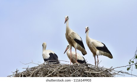 storks ready for outbound flight