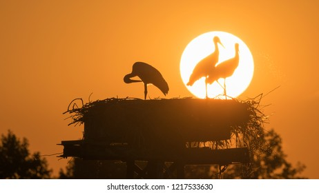 Storks in the sunset