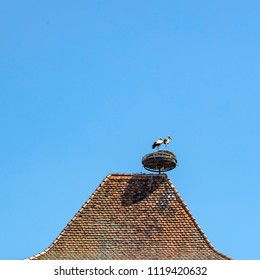 storks at their nest on an old house in Selestat, France