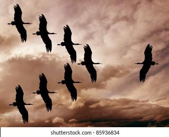 storks in war