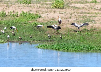 storks,goose and spoonbills on bank of river,Kruger national park,South africa