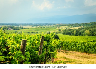 Storm is approaching the vineyards in the fields of Collio, Italy