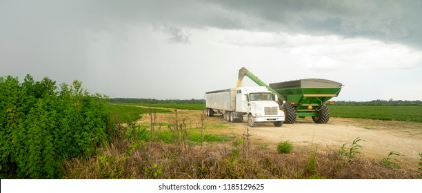 A storm is brewing as Rice just harvested is pumped into the semi trailer for transport to silo and market
