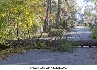 A storm brings down a large tree and utility wires across a neighborhood road blocking access and presenting a danger to travelers