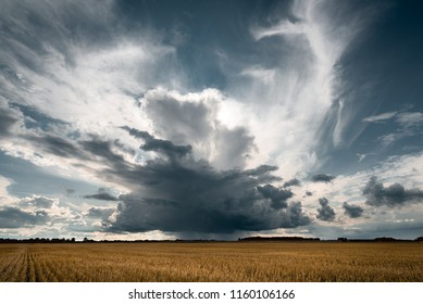 Storm clouds in the golden fields