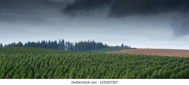 Storm clouds over a panoramic view of an Oregon Christmas tree farm.