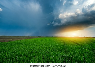 Storm clouds overt sunny wheat field