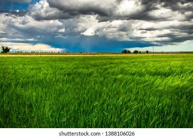A storm in the countryside of Friuli Venezia-Giulia, Italy