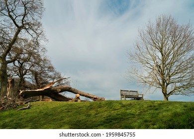 Storm damage to established trees and fallen branches on Westwood public parkland in spring in Beverley, Yorkshire, UK. - Shutterstock ID 1959845755