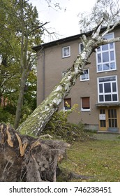Storm damage with fallen birch and damaged house after hurricane Herwart in Berlin, Germany