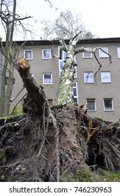 Storm damage with fallen birch, ripped out root ball and damaged house after hurricane Herwart in Berlin, Germany