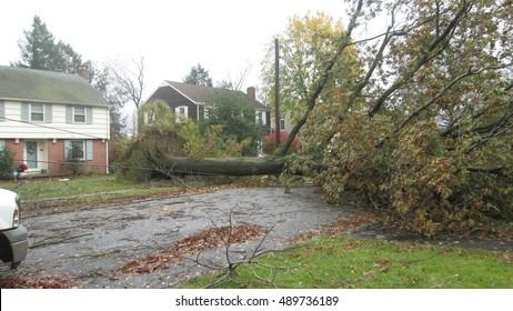 Storm damage fallen tree
